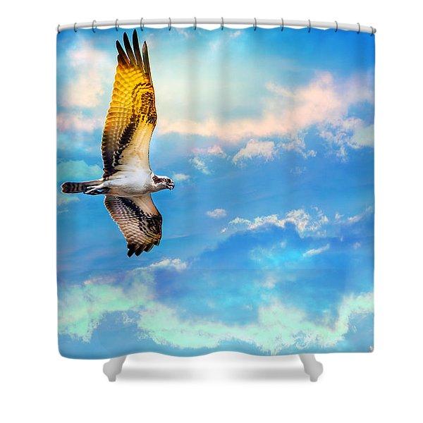 Osprey Soaring High Against A Beautiful Sky Shower Curtain