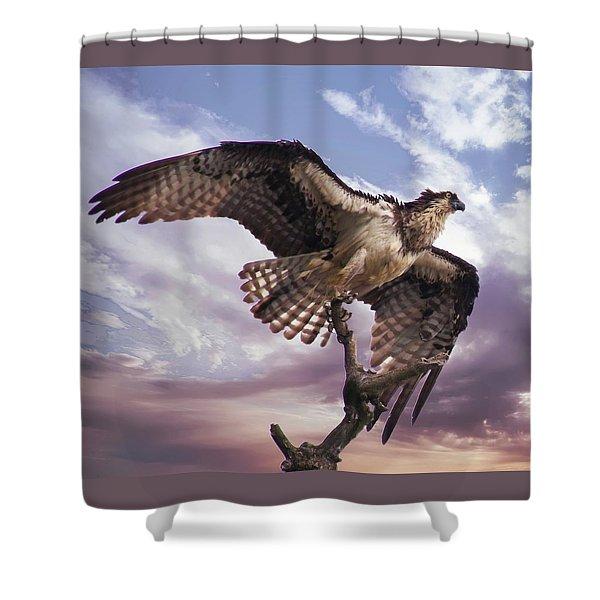 Osprey Wing Shower Curtain