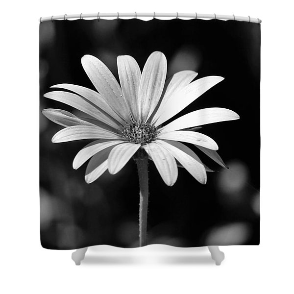 Osteospermum  Shower Curtain