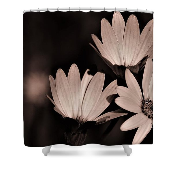 Osteospernum Photo  Shower Curtain