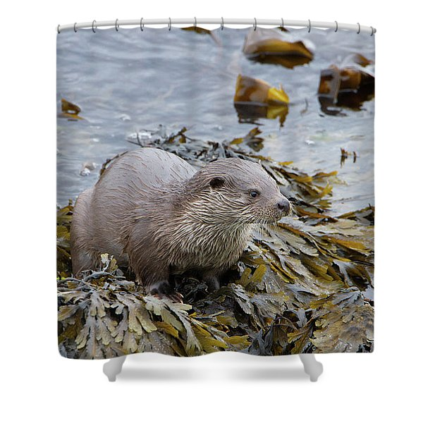 Otter On Seaweed Shower Curtain