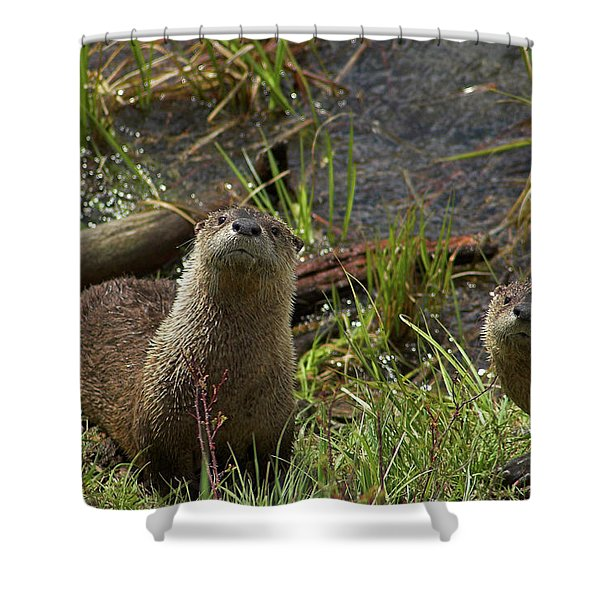 Otters Shower Curtain