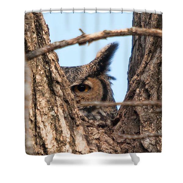 Owl Peek Shower Curtain