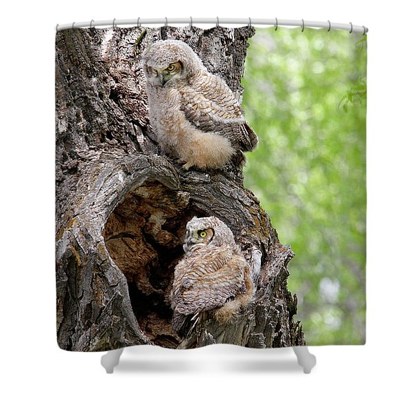 Shower Curtain featuring the photograph Owlets by Ronnie and Frances Howard