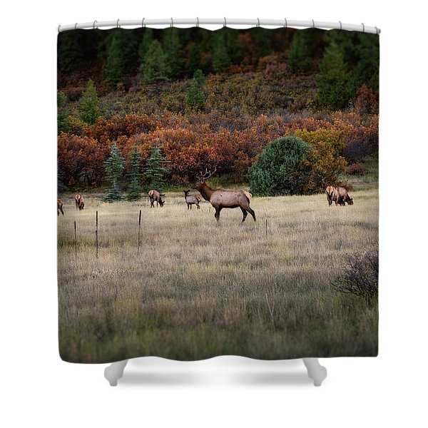 Shower Curtain featuring the photograph Pagosa Autumn Elk by Jason Coward