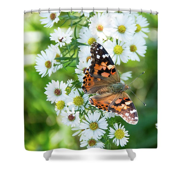 Painted Lady Butterfly Shower Curtain