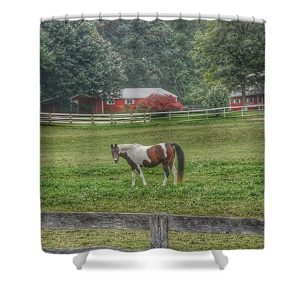 1005 - Painted Pony In Pasture Shower Curtain