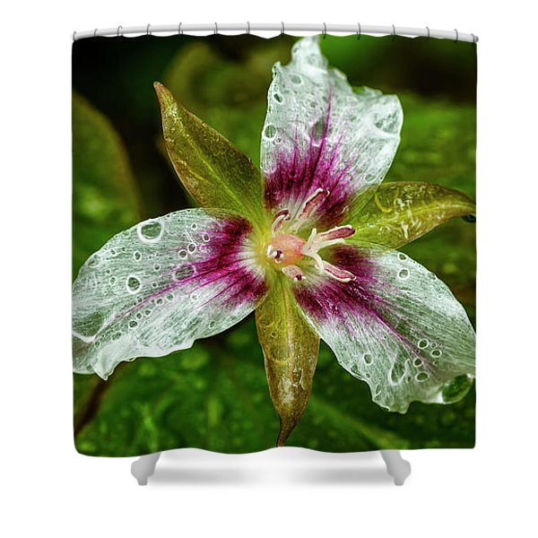 Painted Trillium With Raindrops Shower Curtain