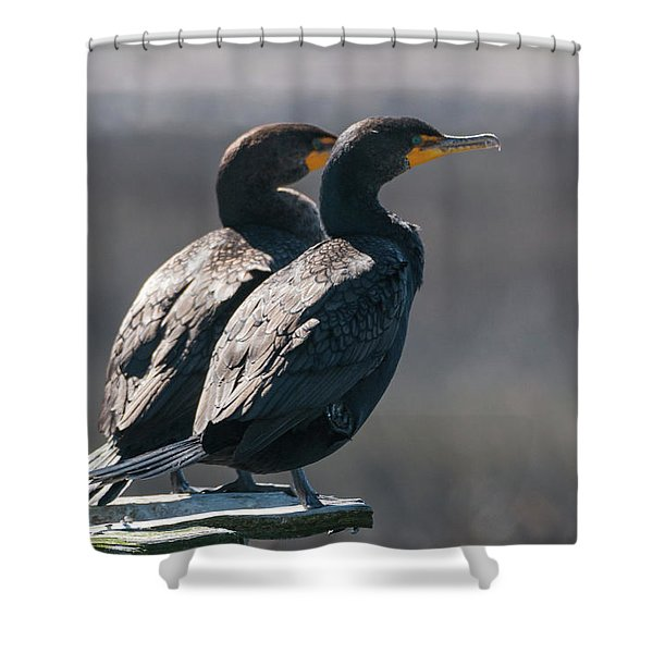 Pair Double-crested Cormorant 3 March 2018 Shower Curtain