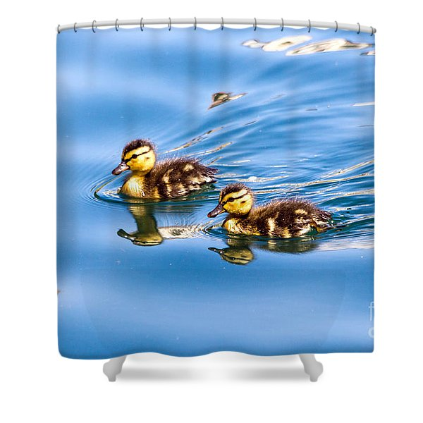Duckling Duo Shower Curtain