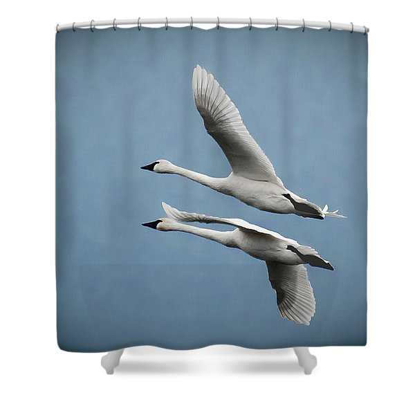 Pair Of Tundra Swan Shower Curtain