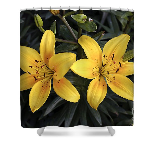 Pair Of Yellow Lilies Shower Curtain