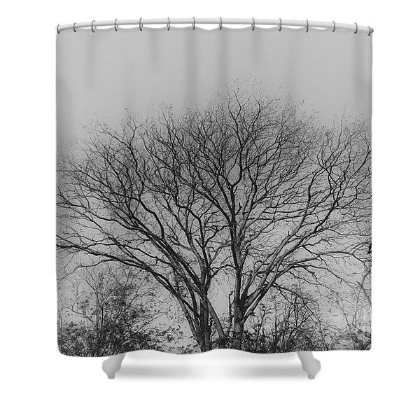Pale Shades Shower Curtain