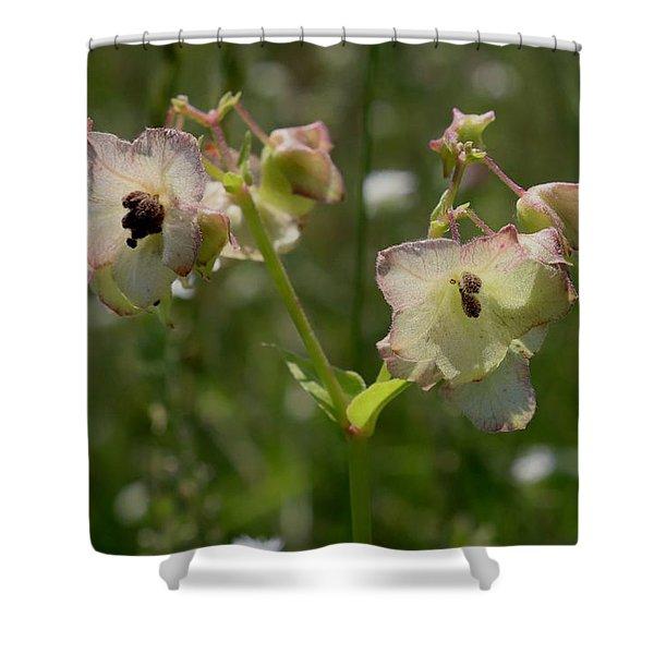 Pale Umbrella Wort Shower Curtain