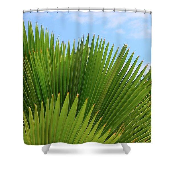 Palm Fans Shower Curtain