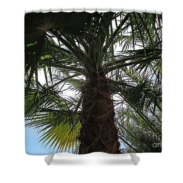 Palm Tree In Almunecar Shower Curtain