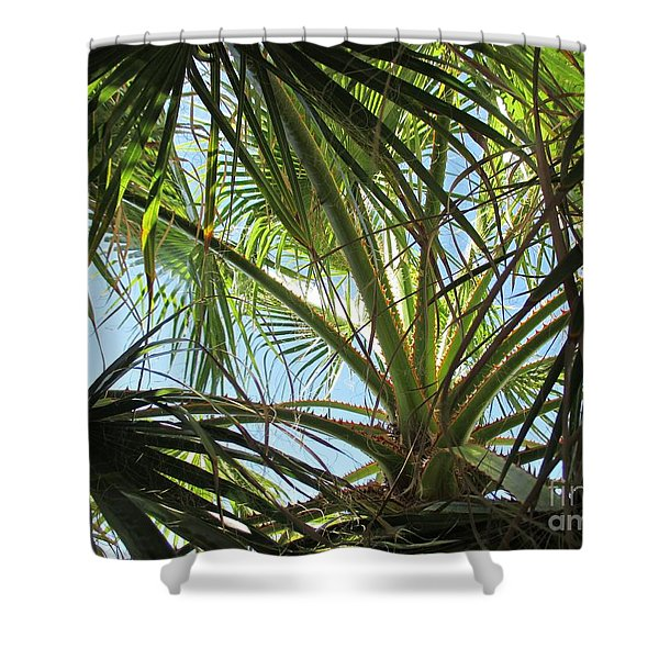 Palm Tree In Fuengirola Shower Curtain