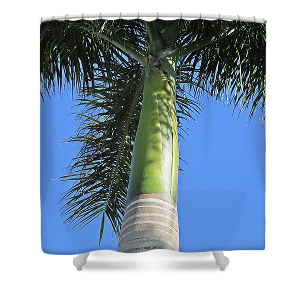 Palm Tree In Malaga Shower Curtain