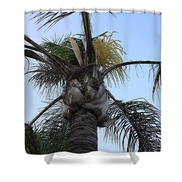 Palm Tree In Torremolinos Shower Curtain