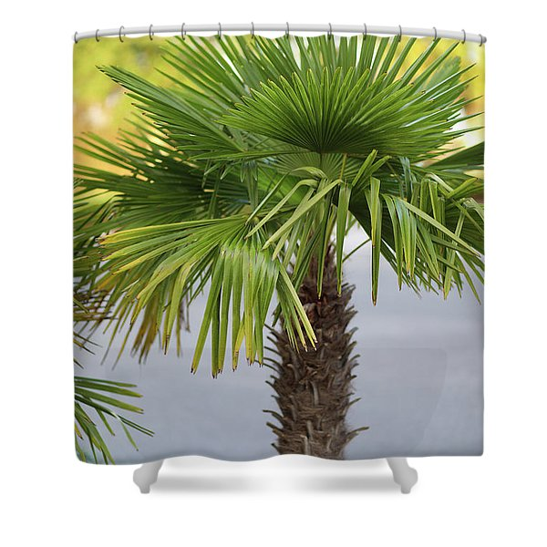 Palm Tree Just There Shower Curtain