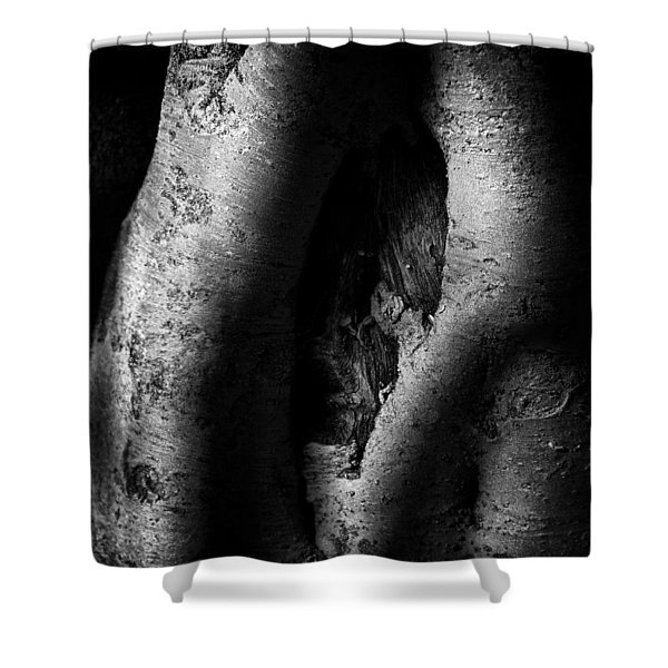 Palo Verde Treee Shower Curtain