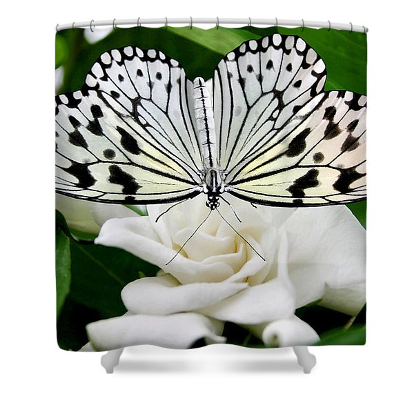 Paperkite On Gardenia Shower Curtain