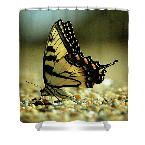 Papilio Glaucus Eastern Tiger Swallowtail Shower Curtain