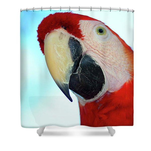 Parrot Head, But Not Necessarily A Fan  Shower Curtain