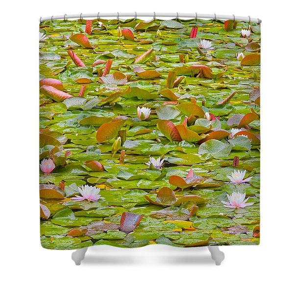 Party At Kaloya Pond Shower Curtain