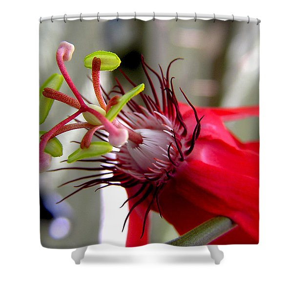 Passion Flower In Red Shower Curtain