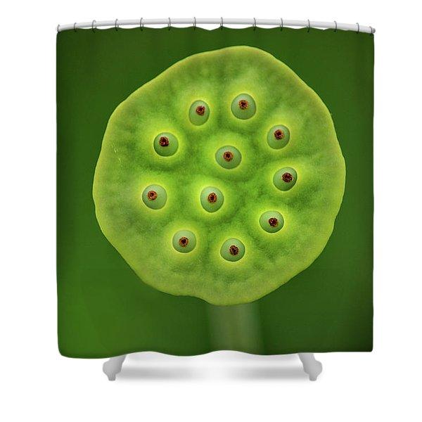 Past Prime Shower Curtain