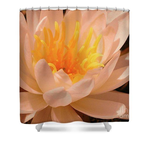 Pastel Pleasures  Shower Curtain