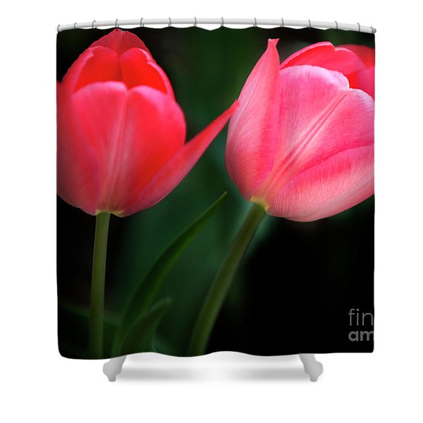 Shower Curtain featuring the photograph Pastel Tulips by David Millenheft