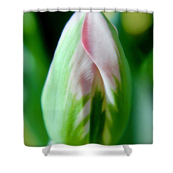 Pastel Tulip Shower Curtain