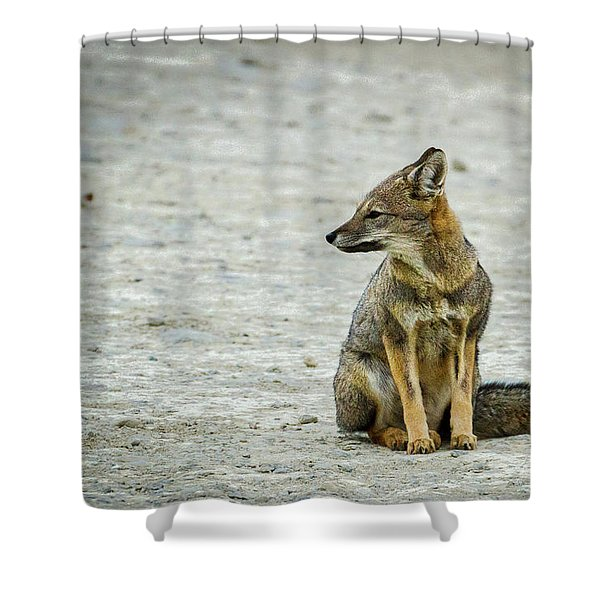 Patagonia Fox - Argentina Shower Curtain