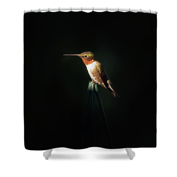 Patch Of Morning Sun Shower Curtain