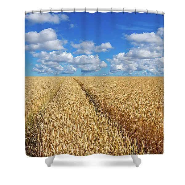 Path In A Golden Wheat Field Shower Curtain