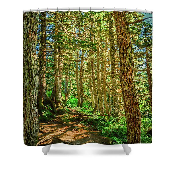 Path In The Trees Shower Curtain