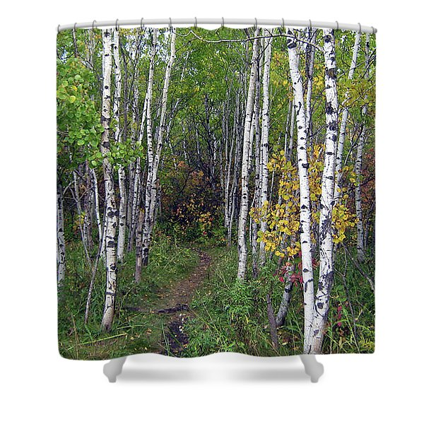 Path In The Woods 5 Shower Curtain