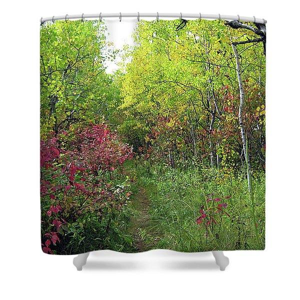 Path In The Woods 8 Shower Curtain