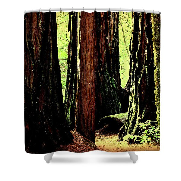 Path Through The Forest Edge . 7d5432 Shower Curtain