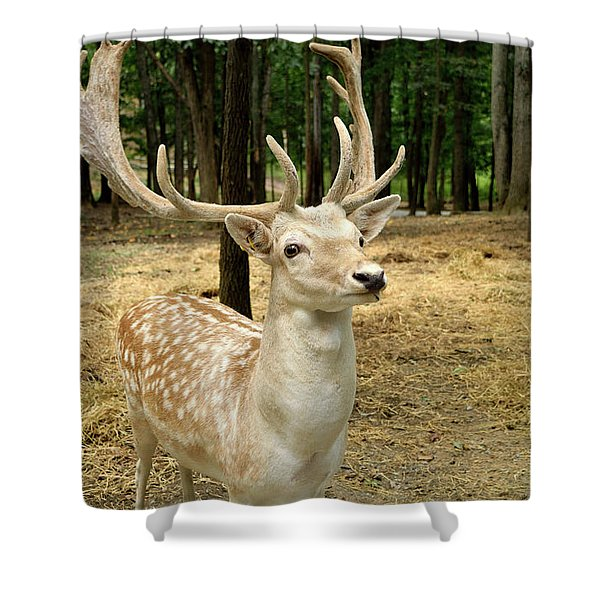 Patiently Waiting Shower Curtain