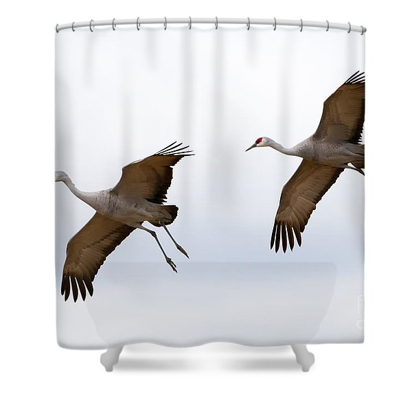 Pattern Of Two Shower Curtain