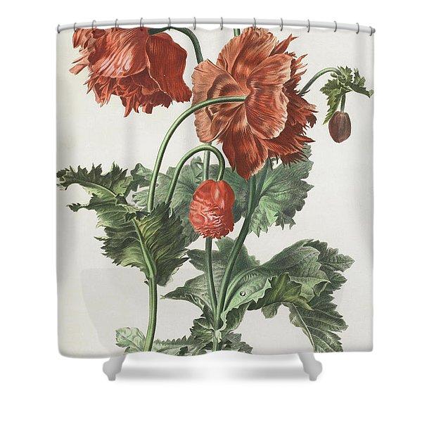Pavot Cultive Shower Curtain