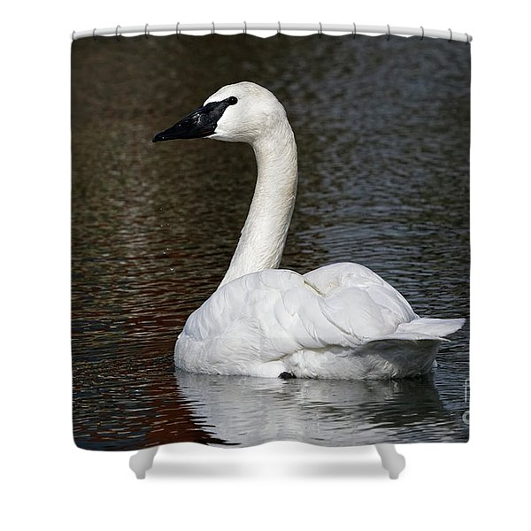 Peaceful Swan Shower Curtain