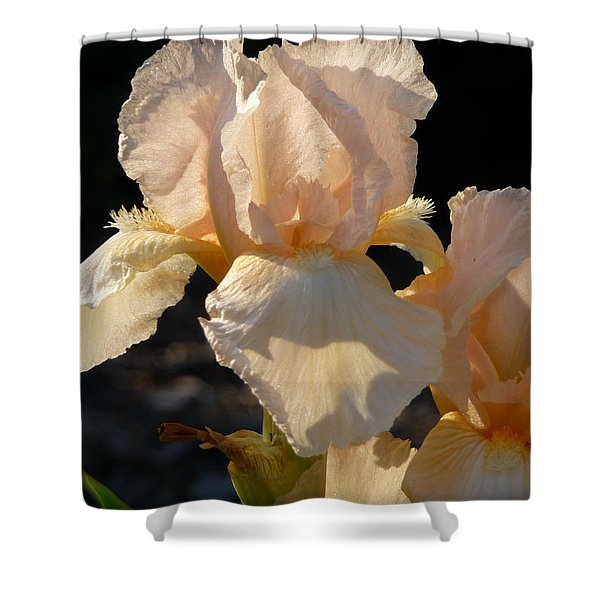 Peach Bearded Iris Shower Curtain