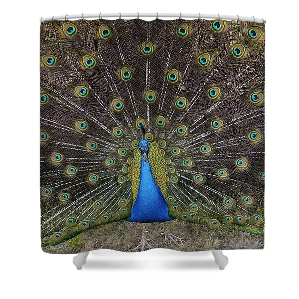 Peacock Displaying Feathers Shower Curtain