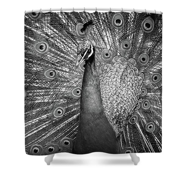 Peacock In Black And White Shower Curtain