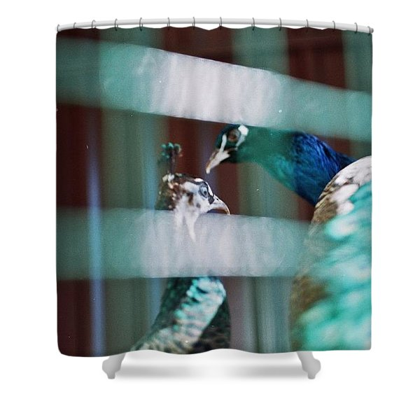 Peacock In The Cage  Shower Curtain