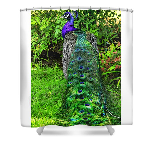 Peacokery Shower Curtain